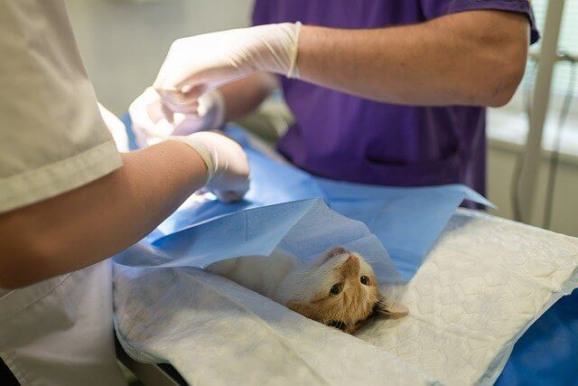 nombres graciosos para empresas veterinarias